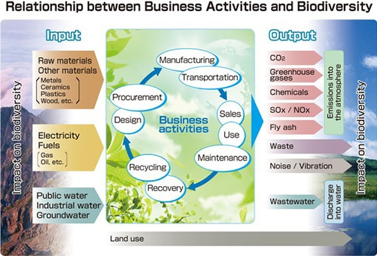 diagram: Relationship between Business Activites and Biodiversity